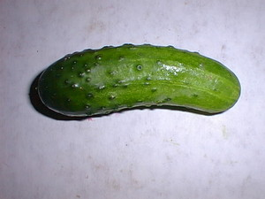 A Pickle, most likely Dill